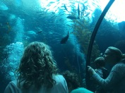 Kelp Forest Exhibit @ California Science Center